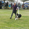 20161120_Greater Sierra Vista Kennel Club_Aussies-248