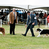 20161120_Greater Sierra Vista Kennel Club_Aussies-204