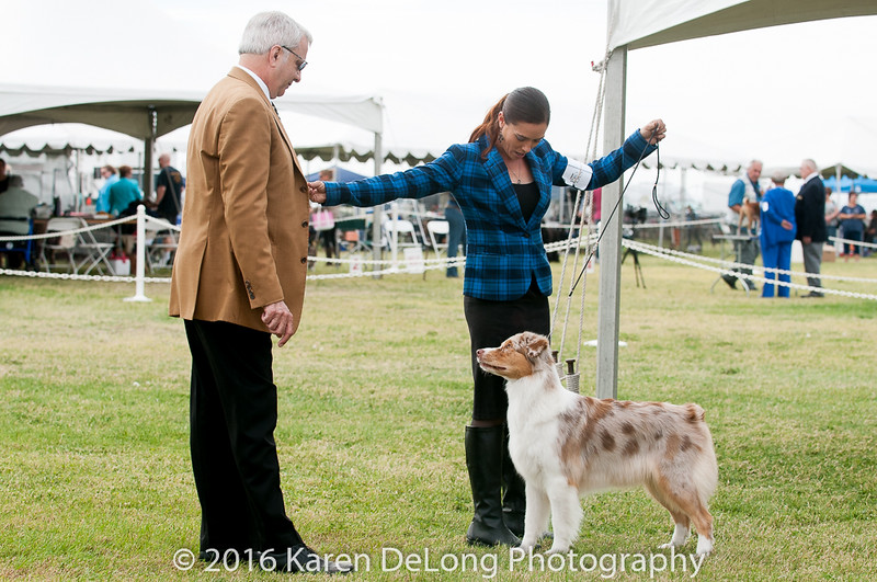 20161120_Greater Sierra Vista Kennel Club_Aussies-312