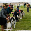 20161120_Greater Sierra Vista Kennel Club_Aussies-149