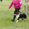 20161120_Greater Sierra Vista Kennel Club_Aussies-13