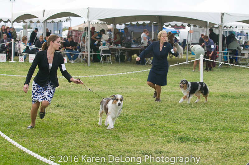 20161120_Greater Sierra Vista Kennel Club_Aussies-278