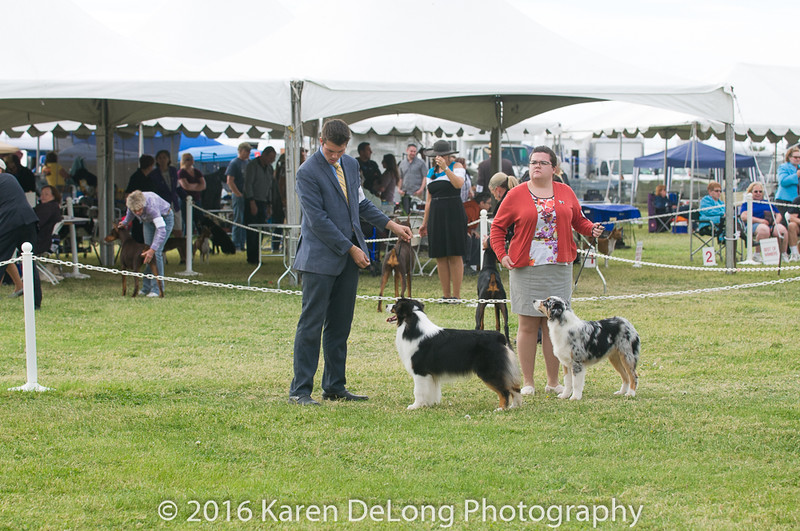 20161120_Greater Sierra Vista Kennel Club_Aussies-191