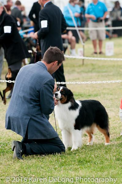 20161120_Greater Sierra Vista Kennel Club_Aussies-233