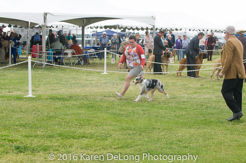 20161120_Greater Sierra Vista Kennel Club_Aussies-36