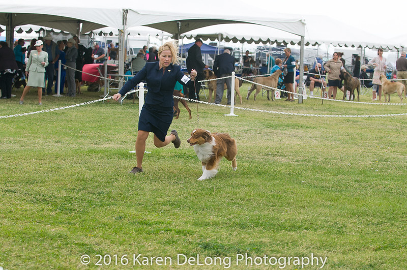 20161120_Greater Sierra Vista Kennel Club_Aussies-67