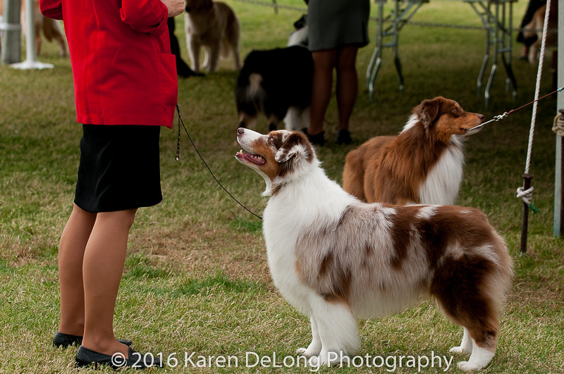 20161120_Greater Sierra Vista Kennel Club_Aussies-377