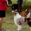 20161120_Greater Sierra Vista Kennel Club_Aussies-377