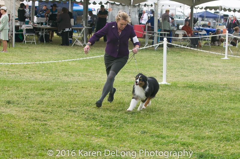 20161120_Greater Sierra Vista Kennel Club_Aussies-250