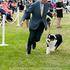 20161120_Greater Sierra Vista Kennel Club_Aussies-201