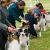 20161120_Greater Sierra Vista Kennel Club_Aussies-153