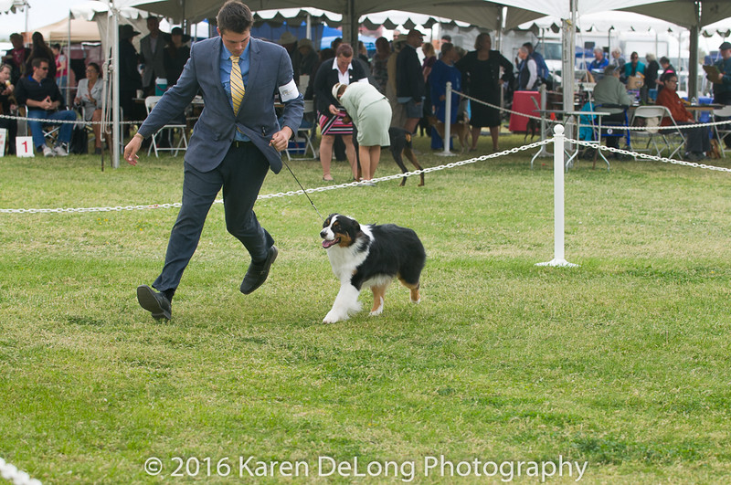 20161120_Greater Sierra Vista Kennel Club_Aussies-52