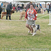 20161120_Greater Sierra Vista Kennel Club_Aussies-42