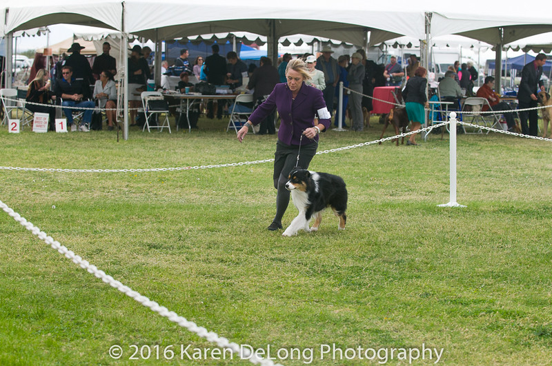 20161120_Greater Sierra Vista Kennel Club_Aussies-70