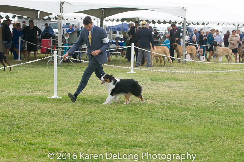 20161120_Greater Sierra Vista Kennel Club_Aussies-49