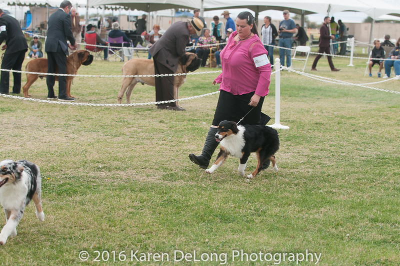 20161120_Greater Sierra Vista Kennel Club_Aussies-43