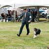 20161120_Greater Sierra Vista Kennel Club_Aussies-360