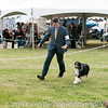 20161120_Greater Sierra Vista Kennel Club_Aussies-360