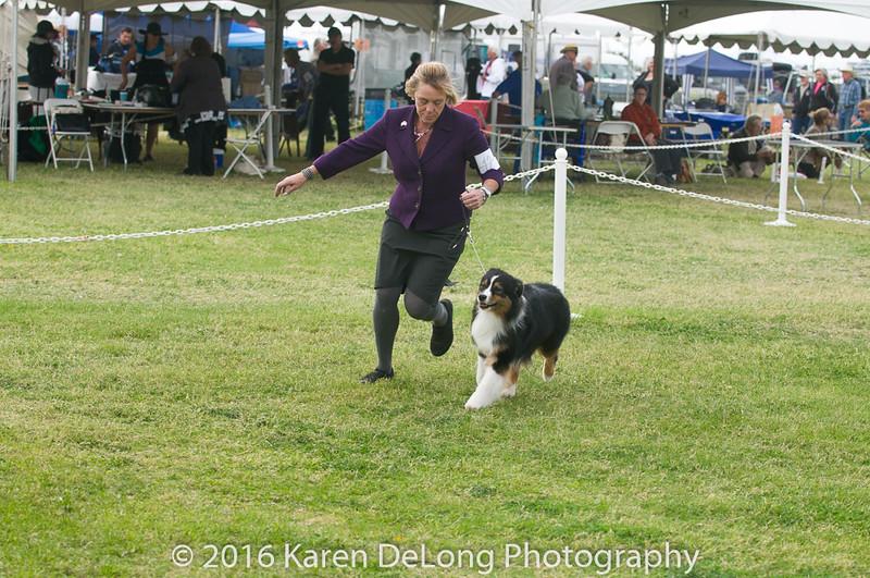 20161120_Greater Sierra Vista Kennel Club_Aussies-249