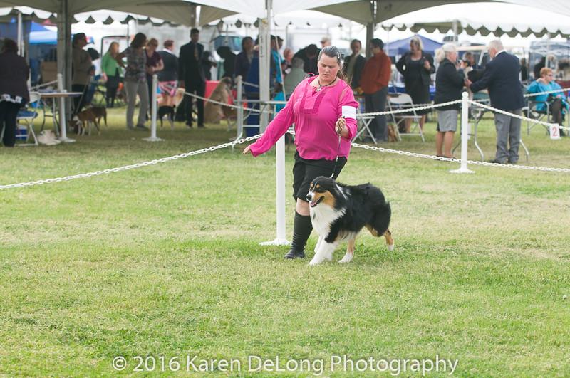 20161120_Greater Sierra Vista Kennel Club_Aussies-121
