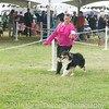 20161120_Greater Sierra Vista Kennel Club_Aussies-121