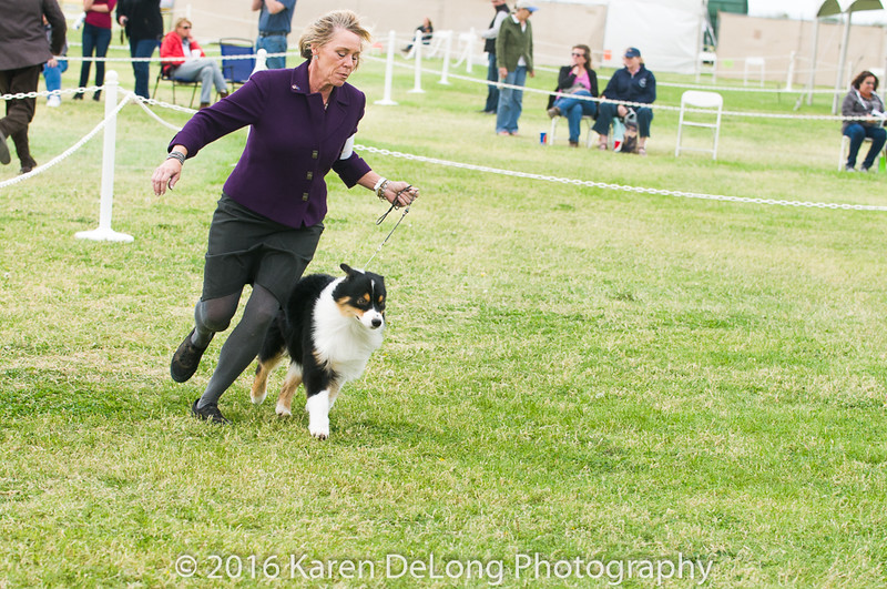 20161120_Greater Sierra Vista Kennel Club_Aussies-88