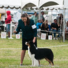 20161120_Greater Sierra Vista Kennel Club_Aussies-221