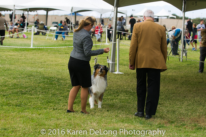 20161120_Greater Sierra Vista Kennel Club_Aussies-140
