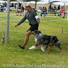20161120_Greater Sierra Vista Kennel Club_Aussies-133