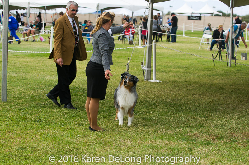 20161120_Greater Sierra Vista Kennel Club_Aussies-145
