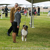 20161120_Greater Sierra Vista Kennel Club_Aussies-144