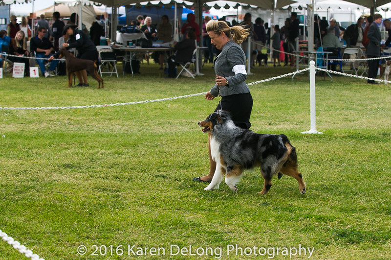 20161120_Greater Sierra Vista Kennel Club_Aussies-134