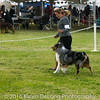 20161120_Greater Sierra Vista Kennel Club_Aussies-134
