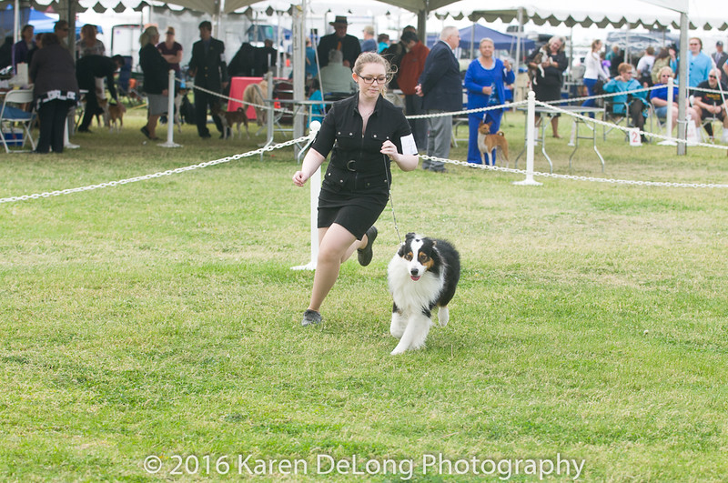 20161120_Greater Sierra Vista Kennel Club_Aussies-110