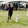 20161120_Greater Sierra Vista Kennel Club_Aussies-357