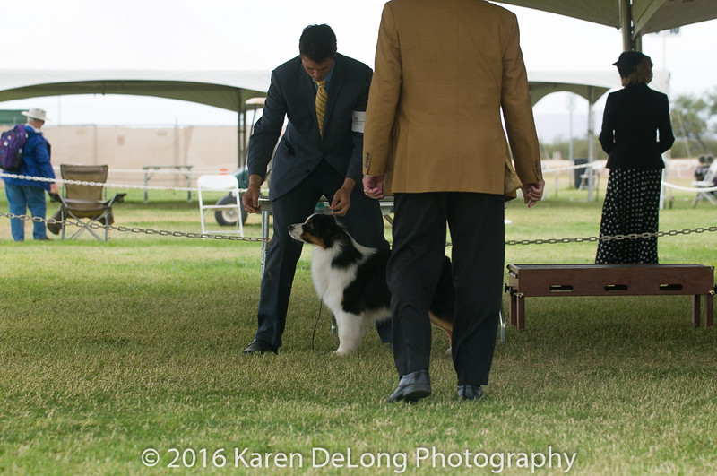 20161120_Greater Sierra Vista Kennel Club_Aussies-46