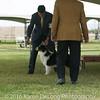 20161120_Greater Sierra Vista Kennel Club_Aussies-46