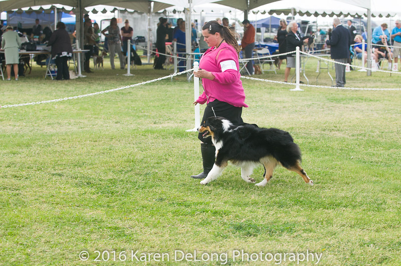 20161120_Greater Sierra Vista Kennel Club_Aussies-114
