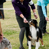 20161120_Greater Sierra Vista Kennel Club_Aussies-326