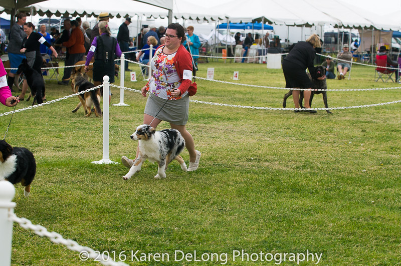 20161120_Greater Sierra Vista Kennel Club_Aussies-11