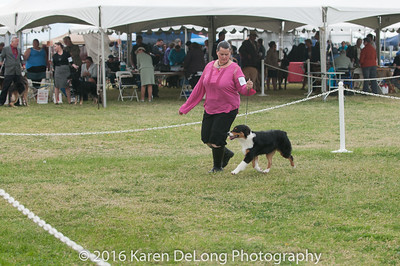 20161120_Greater Sierra Vista Kennel Club_Aussies-22