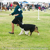 20161120_Greater Sierra Vista Kennel Club_Aussies-94