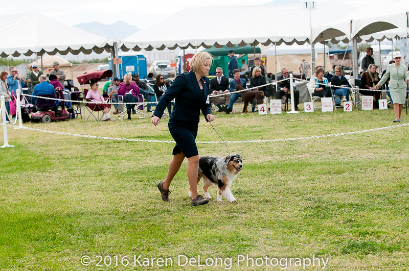 20161120_Greater Sierra Vista Kennel Club_Aussies-302
