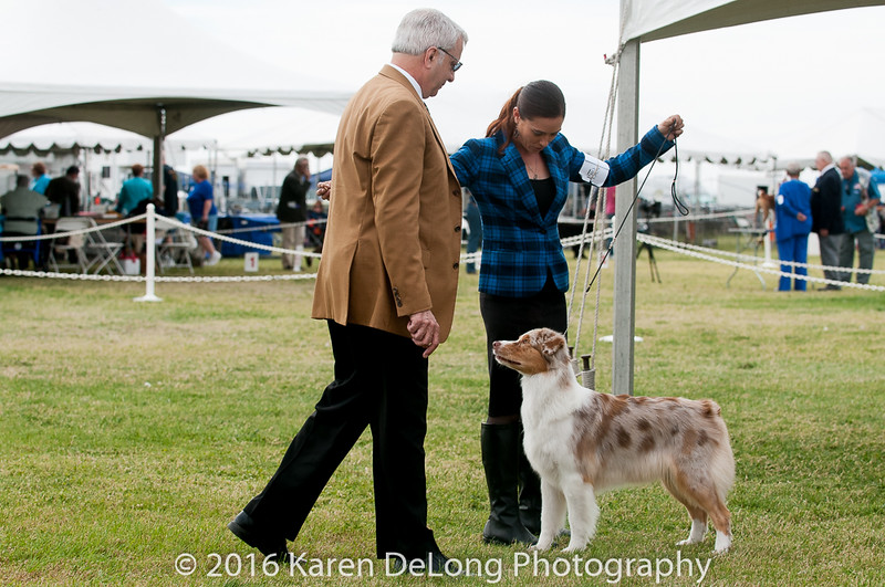 20161120_Greater Sierra Vista Kennel Club_Aussies-314