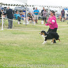 20161120_Greater Sierra Vista Kennel Club_Aussies-117
