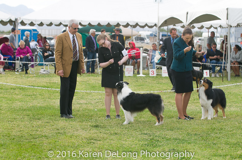 20161120_Greater Sierra Vista Kennel Club_Aussies-183