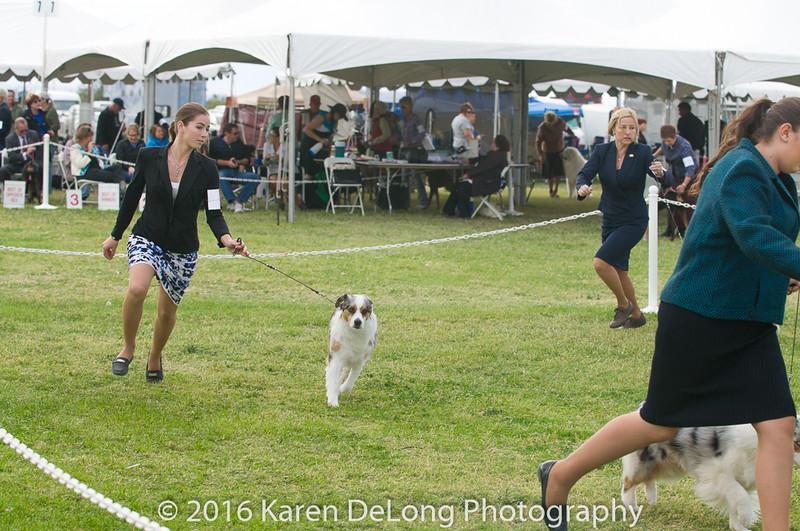 20161120_Greater Sierra Vista Kennel Club_Aussies-276
