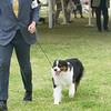 20161120_Greater Sierra Vista Kennel Club_Aussies-59