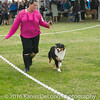 20161120_Greater Sierra Vista Kennel Club_Aussies-27