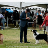 20161120_Greater Sierra Vista Kennel Club_Aussies-195